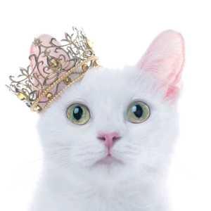手帐 日子全都喂给了猫 ,手帐分享